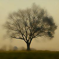 17-Auprès_de_mon_arbre.jpg