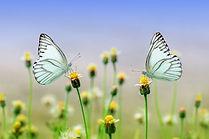 butterfly-1127666.jpg
