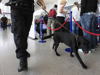 Are airport sniffer dogs keeping flyers safe?