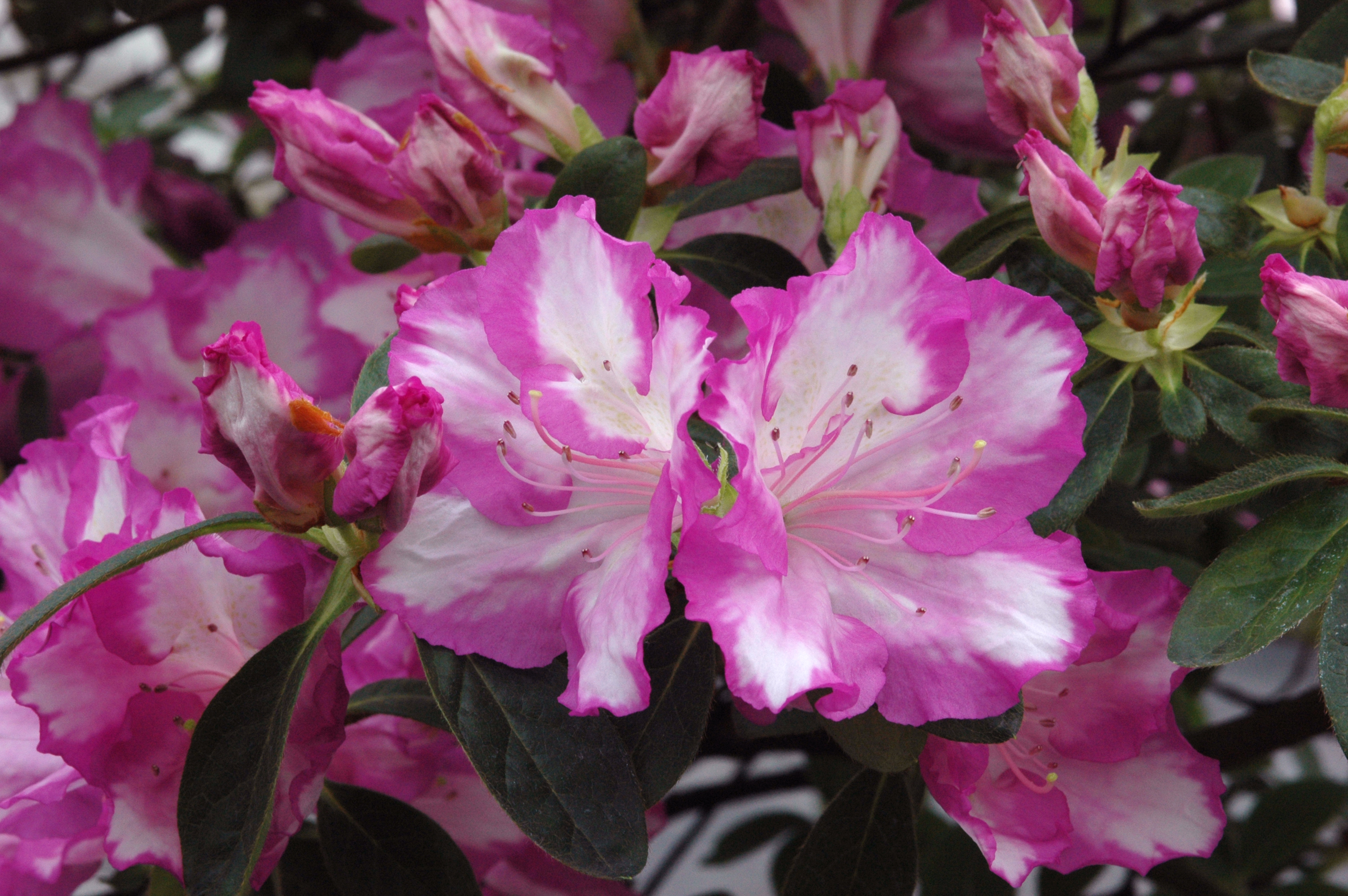 38 Rosa Belton 08-04 021