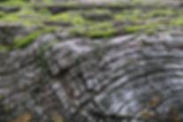 wood-3972919_1920.jpg