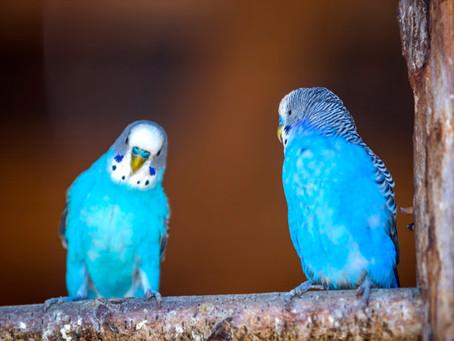 Ik zag twee vogels