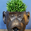 Thumbnail: Monkey Head Planter