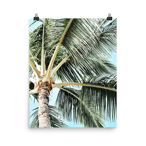 "Kauai Palm  16x20"" Print"