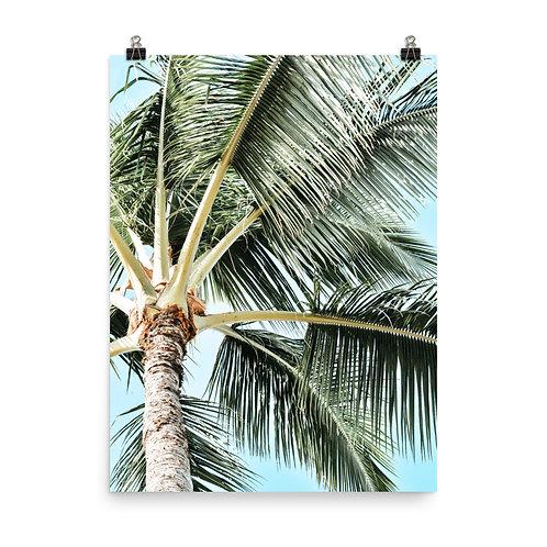 "Kauai Palm  18x24"" Print"