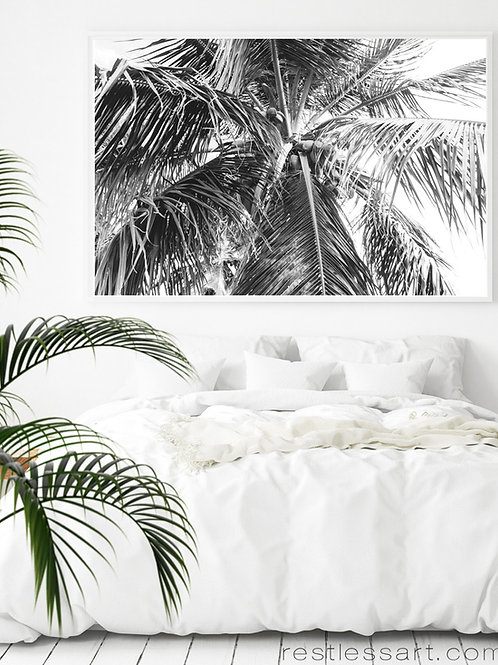 Puerto Rico Palm