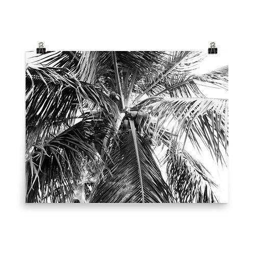 "Puerto Rico Palm 18x24"" Print"