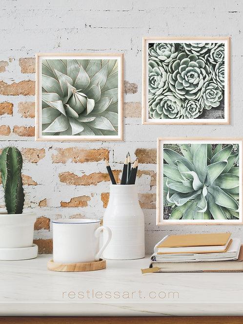 Sage Succulents | Square Set