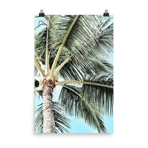 "Kauai Palm    24x36"" Print"
