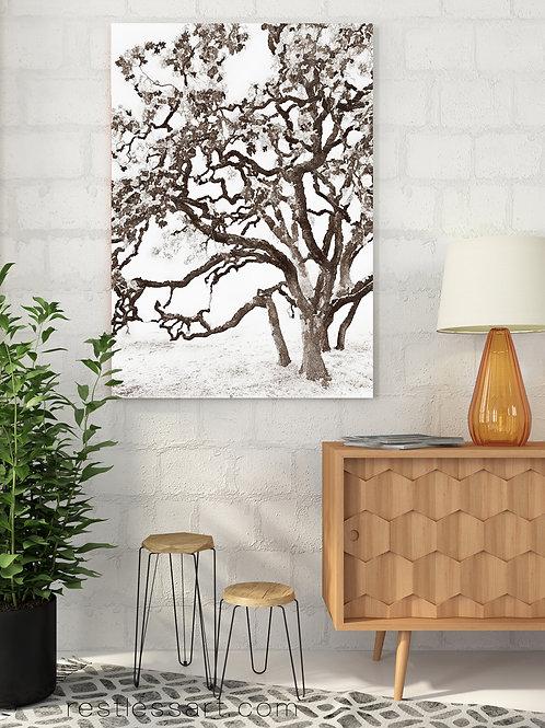 Wine Country Oak