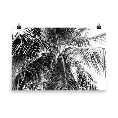 "Puerto Rico Palm 24x36"" Print"