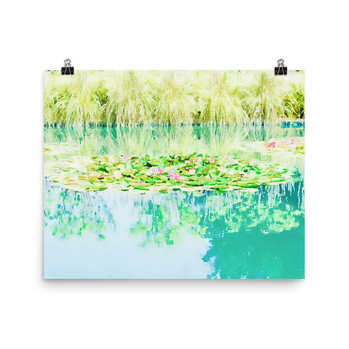 "Sonoma Water Lilies   16x20"" Print"