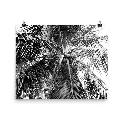 "Puerto Rico Palm  16x20"" Print"