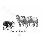 border-collie-14.jpg