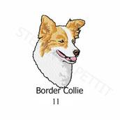 border-collie-11.jpg