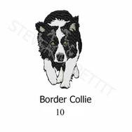 border-collie-10.jpg