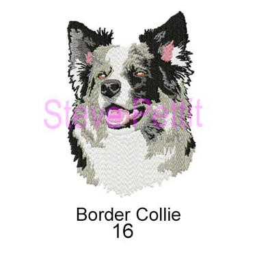 border-collie-16.jpg