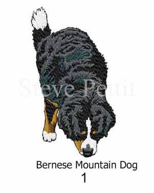 bernese-mountain-dog-1watermarked.jpg