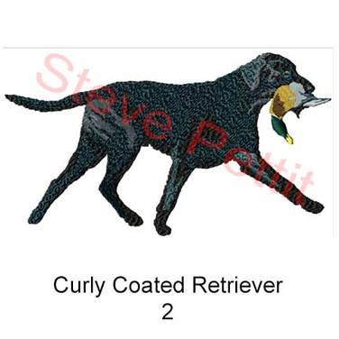 curly-coat--2.jpg