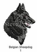 belgian-sheepdog-1watermarked.jpg