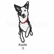 Koolie-3watermarked.jpg