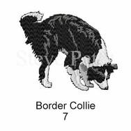 border-collie-7watermarked.jpg