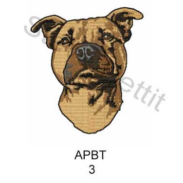 apbt-3.jpg