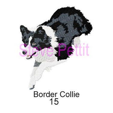 border-collie-15.jpg