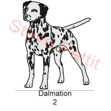 dalmation-2.jpg