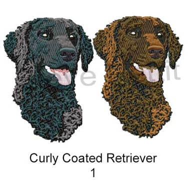 curly-coat--1.jpg