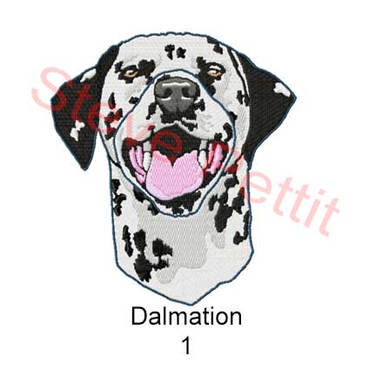 dalmation-1.jpg