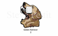 golden-2watermarked.jpg