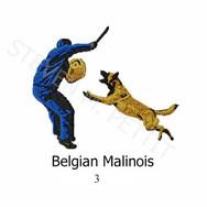 MALINOIS-3.jpg