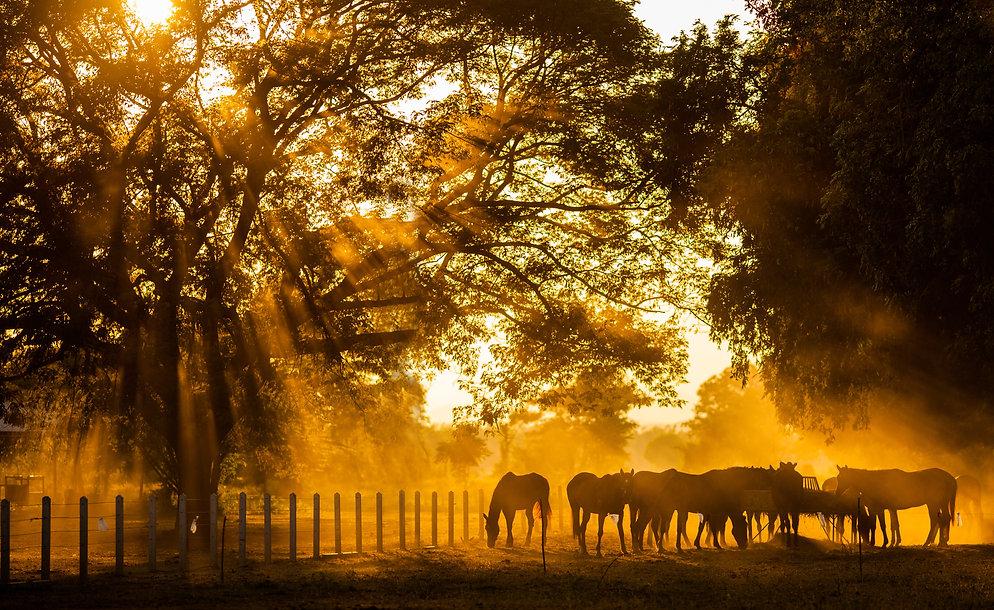 Golden Light in the stables.jpg