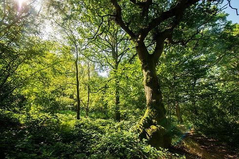 woods-stock.jpg
