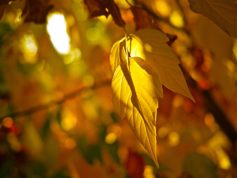 stock-photo-autumn-glow-24624609.jpg