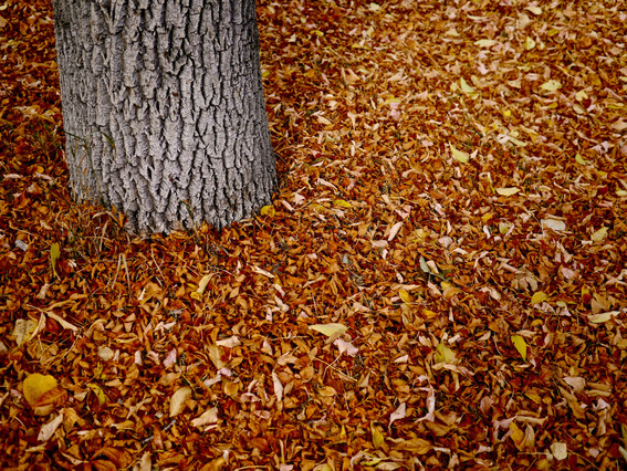 stock-photo-autumn-blanket-24624615.jpg