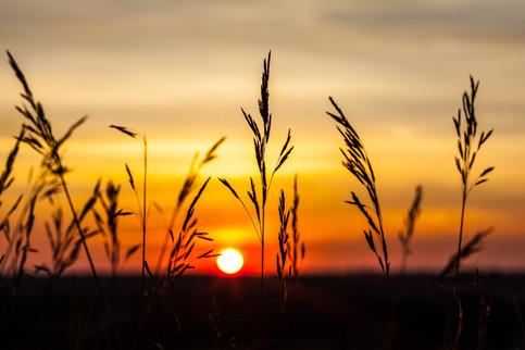 Sunrise from the tall grass.jpg