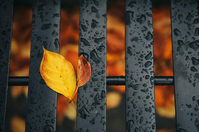 Fall has fallen.jpg