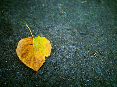stock-photo-fallen-leaf-24623429.jpg