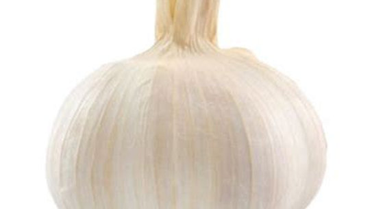 Garlic - Bulb