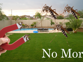 CST #463: Mosquito Magnet