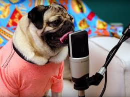 CST #535: Dog Hair on My Pop Filter