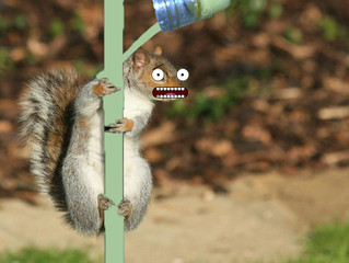 CST #446: Squirrels on a Greased Pole
