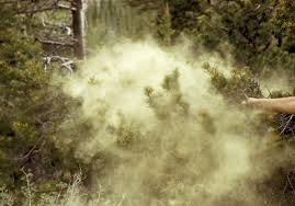 Dispatches from Quarantine Ep 2: Pollen Clouds