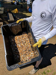 Coastal Warriors Cleaning up Cigarette butts on the mid north coast
