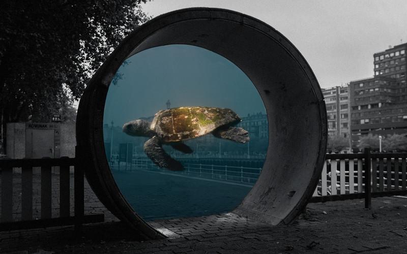 tartaruga.jpg