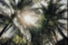 Screen Shot 2020-04-27 at 9.39.26 AM.png