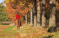 Tarn à cheval
