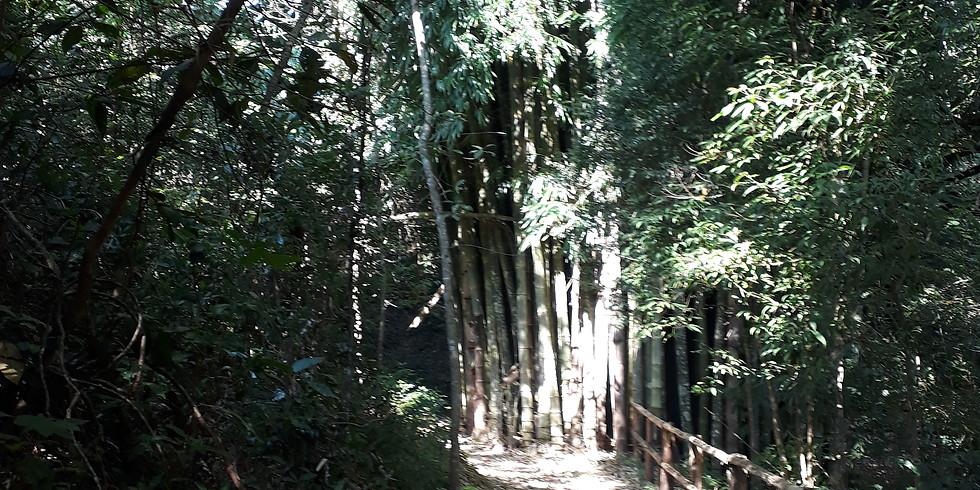 Jardim Sensorial - Mata Atlântica - Quinta-feira